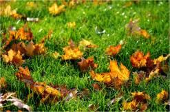naughty leaves